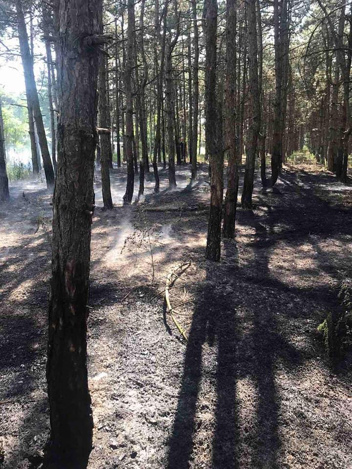 У Баштанки горела пшеница на корню, а у Николаева – Балобановский лес (ФОТО) 11