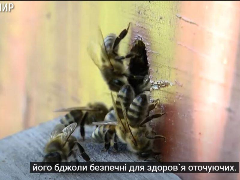 Пчеловод в шортах. Украинский пасечник вывел породу пчел, которые не кусаются (ФОТО, ВИДЕО)