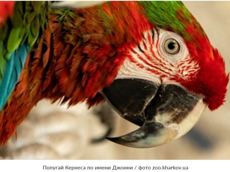 В Харькове любимого попугая Кернеса выселили из горсовета (ВИДЕО)