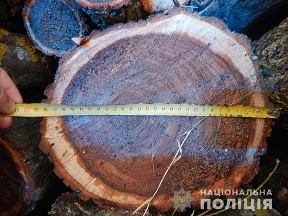 И снова Вознесенск. Туда водитель без документов вез спиленные деревья без документов (ФОТО) 5