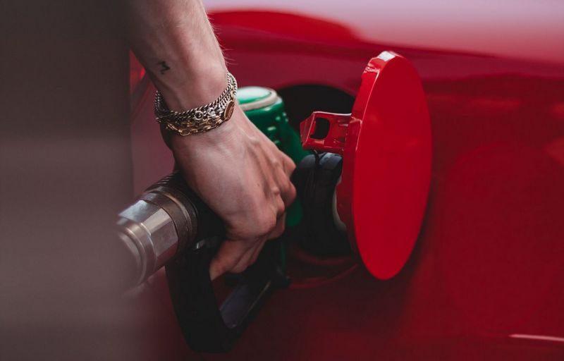 Использование биодизеля в дизтопливе приведет к уничтожению лесной площади, равной площади Нидерландов, – исследование