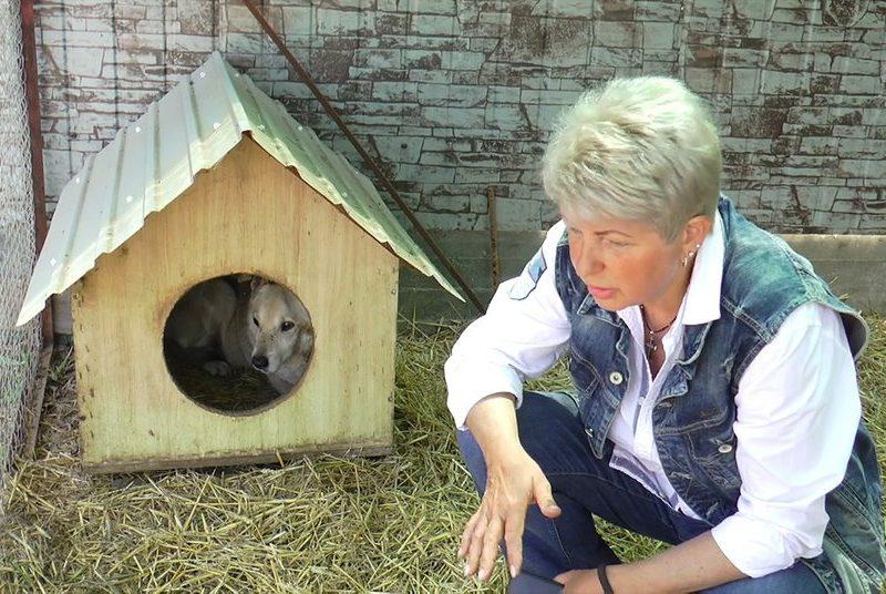 Под Николаевом жестоко избили хозяйку семейного приюта для бездомных животных