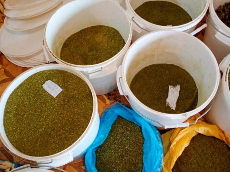 Кусты конопли и около 40 кг каннабиса изъяли николаевские полицейские у жителя Нового Буга (ФОТО, ВИДЕО)
