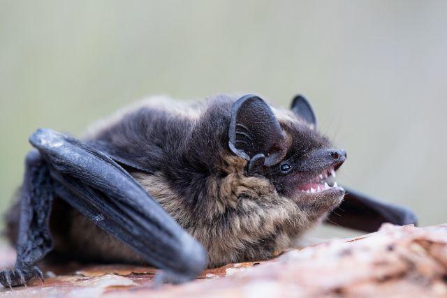 В Чехии проходят «Ночи летучих мышей»
