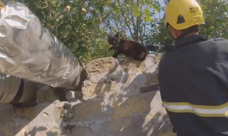 В Николаеве спасатели освободили кота, запутавшегося хвостом в колючей проволоке (ВИДЕО)