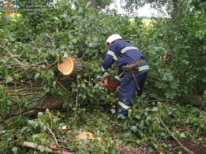 Снова спасатели убирали дерево, упавшее на трассу (ФОТО)