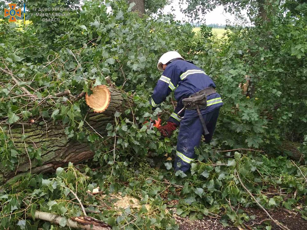 Снова спасатели убирали дерево, упавшее на трассу (ФОТО) 7