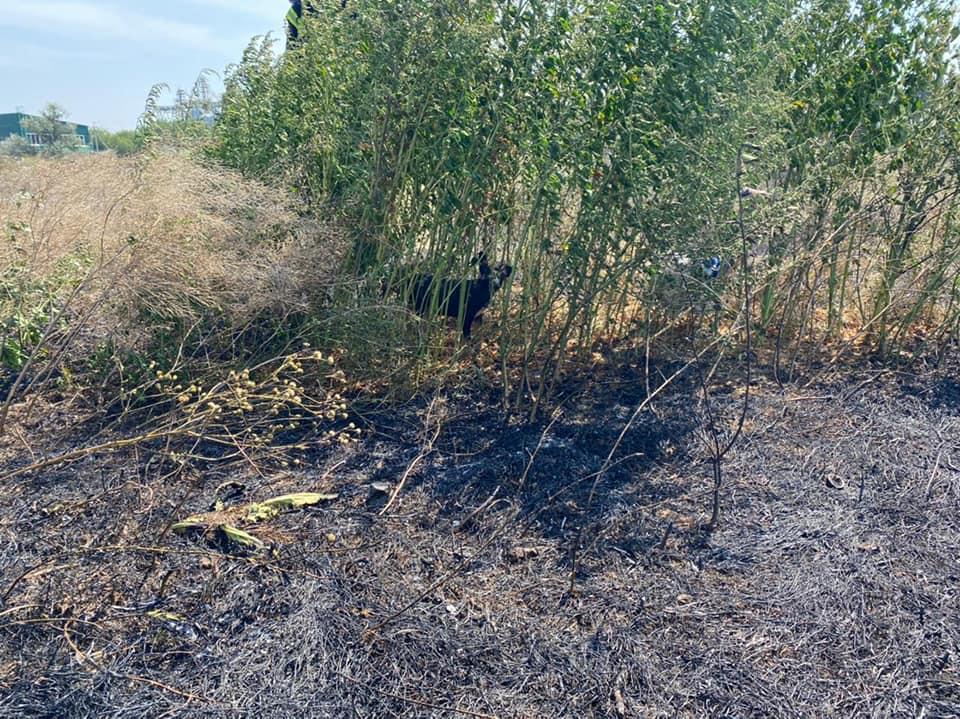 Пожары в экосистемах Николаевщины: пожарным удалось спасти щенка, который мог погибнуть в огне (ФОТО) 3