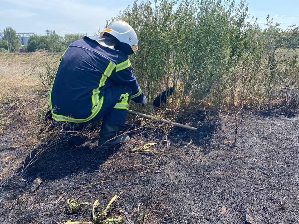 Пожары в экосистемах Николаевщины: пожарным удалось спасти щенка, который мог погибнуть в огне (ФОТО) 5
