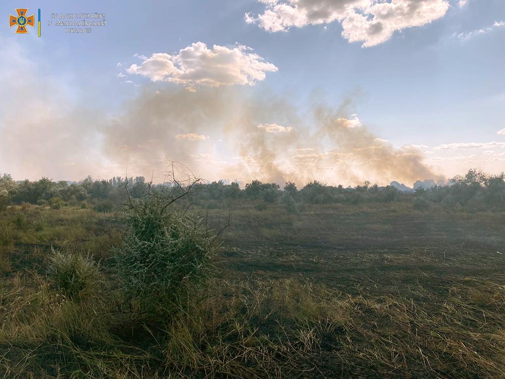 Тушат масштабный пожар неподалеку от Николаева: огонь шел на дачи и лесопосадку (ФОТО) 5