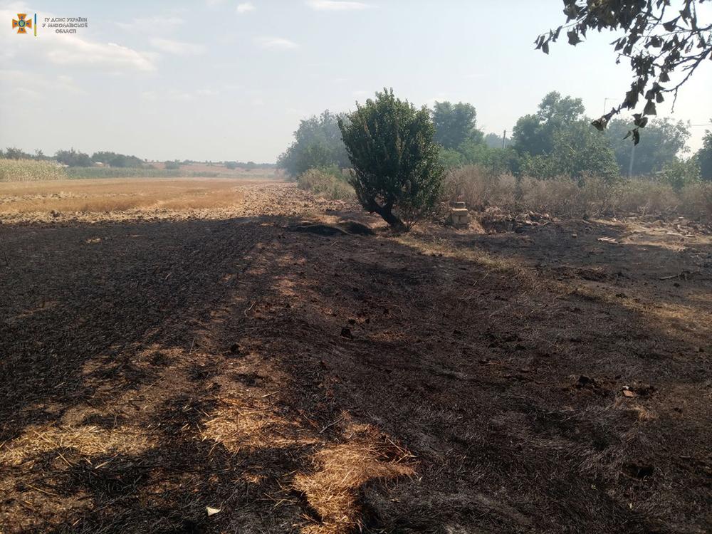На Николаевщине за сутки 26 раз тушили пожары в экосистемах, в двух случаях огонь перекинулся на жилой сектор (ФОТО) 3