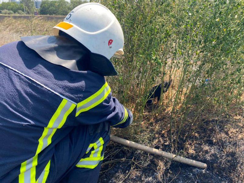 Пожары в экосистемах Николаевщины: пожарным удалось спасти щенка, который мог погибнуть в огне (ФОТО)