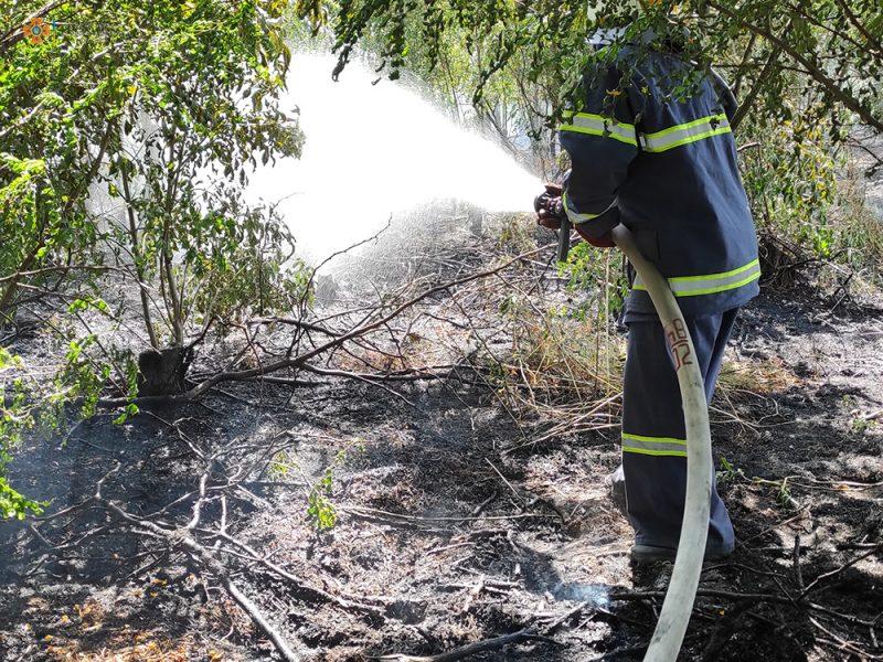 На Николаевщине за сутки 26 раз тушили пожары в экосистемах, в двух случаях огонь перекинулся на жилой сектор (ФОТО)