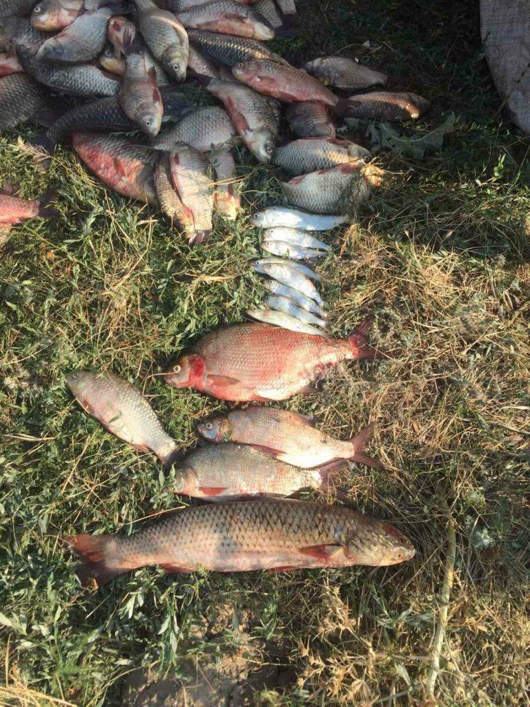 На Днепро-Бугском лимане Николаевский рыбоохранный патруль поймал браконьеров с 40 кг рыбы (ФОТО) 3