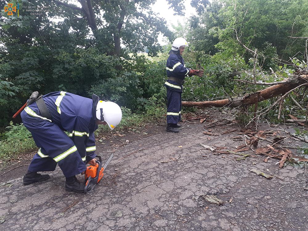 Снова спасатели убирали дерево, упавшее на трассу (ФОТО) 1