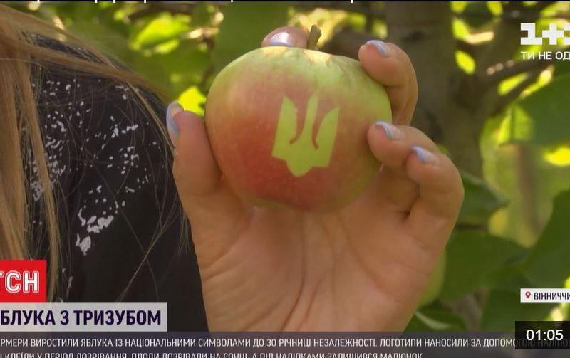 Винницкие фермеры ко Дню Независимости вырастили яблоки с трезубцем (ВИДЕО)