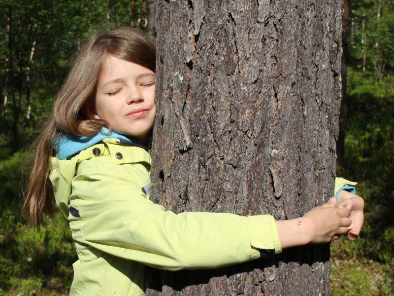 В Лапландии проходит чемпионат мира по обниманию деревьев