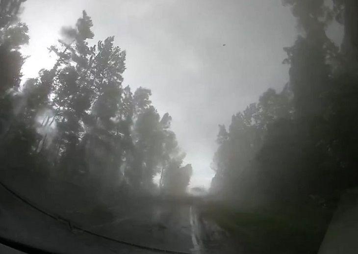 Китайские туристы чуть не погибли в Беларуси, но сняли, как ураган валит лес (ВИДЕО)