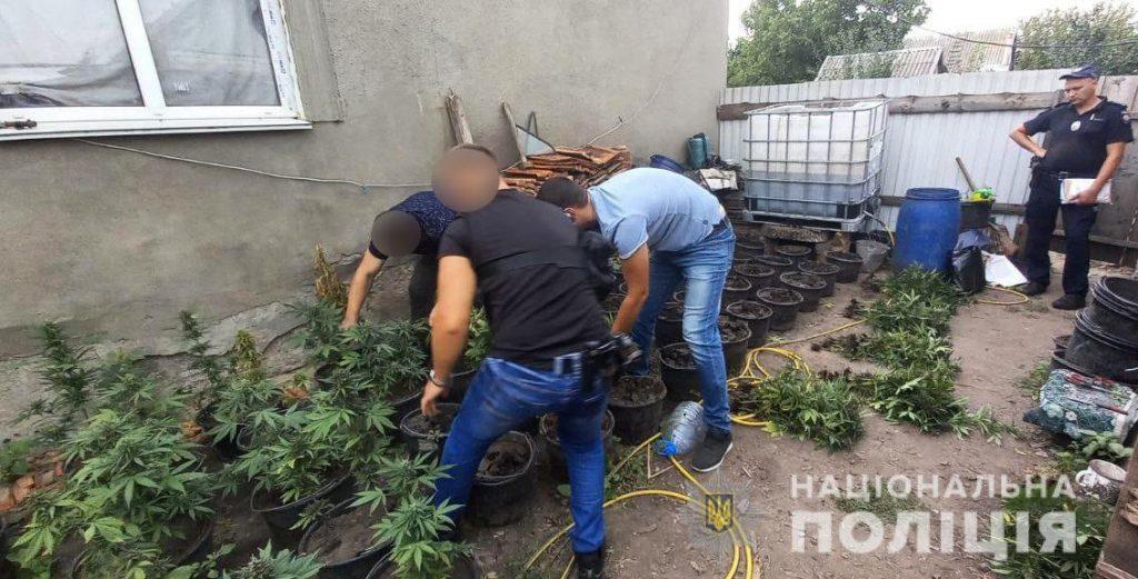 Николаевские полицейские нашли горшки с коноплей (ФОТО) 3