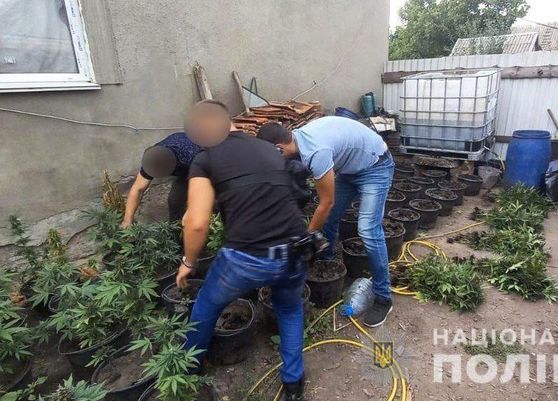 Николаевские полицейские нашли горшки с коноплей (ФОТО)