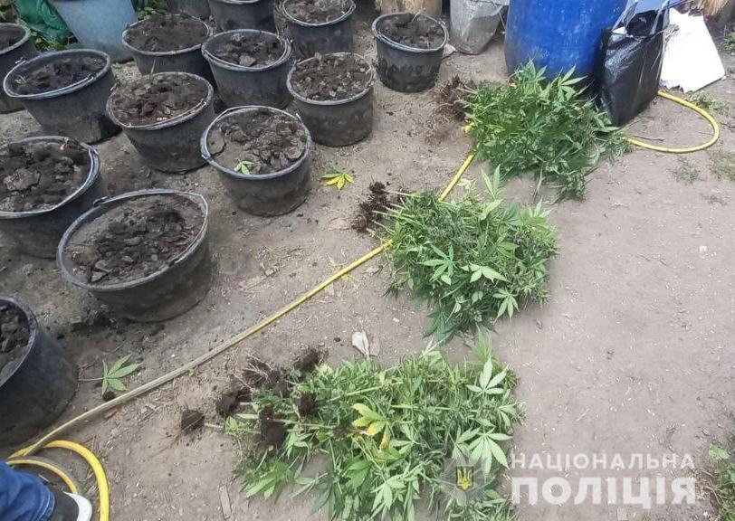 Николаевские полицейские нашли горшки с коноплей (ФОТО) 9