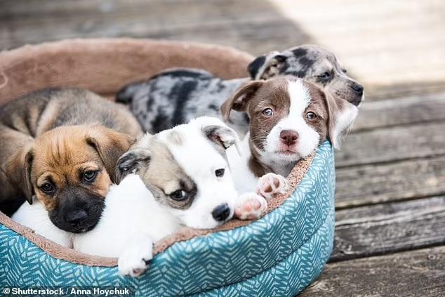«Спасение от пандемии»: стоимость щенков в Британии во время пандемии взлетела чуть ли не вдвое