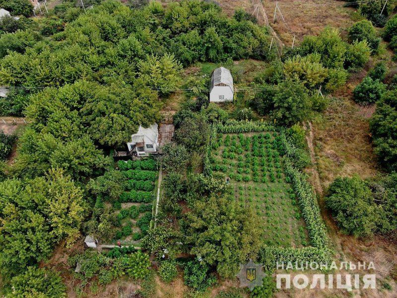 Полиция нашла на даче жителя Николаевщины плантацию конопли на 5,5 млн.грн (ВИДЕО)