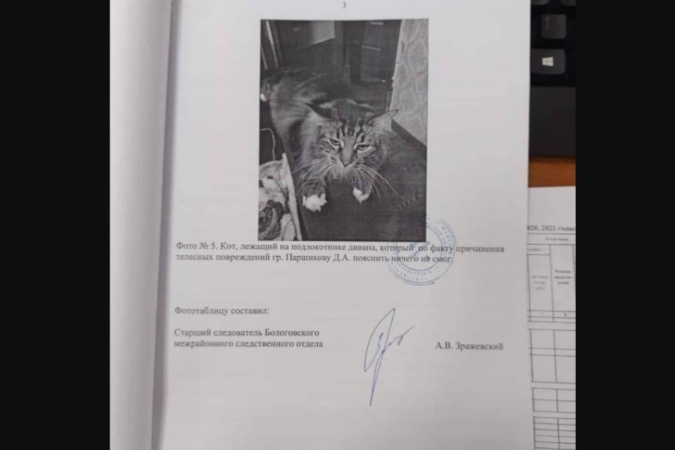 """""""Пояснить ничего не смог"""", - в России следователи привлекли в свидетели кота (ФОТО) 1"""