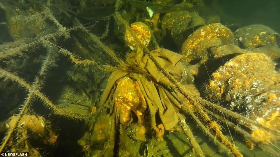 След Янтарной комнаты? Польские дайверы начинают исследование затонувшего в 1945 году немецкого корабля «Карлсруэ» (ФОТО) 1