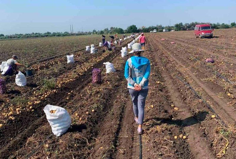На Николаевщине в секторе АПК — наибольшее количество незадекларированных работников