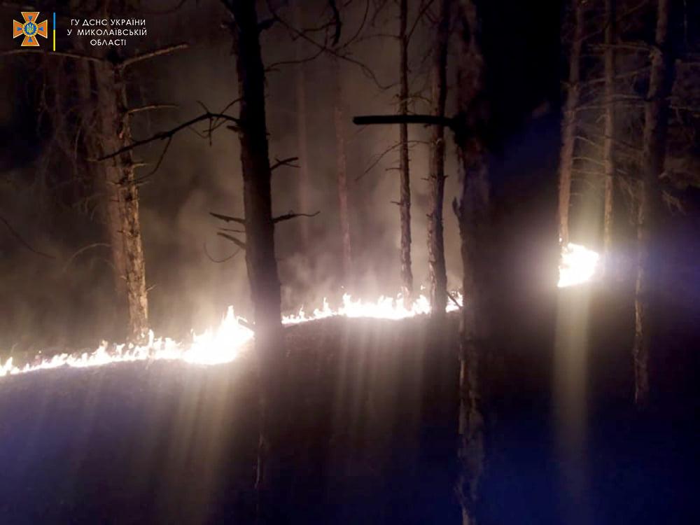 Опять поджоги. За сутки на Николаевщине горело свыше 2 га лесов и 32,5 га открытых территорий (ФОТО) 1