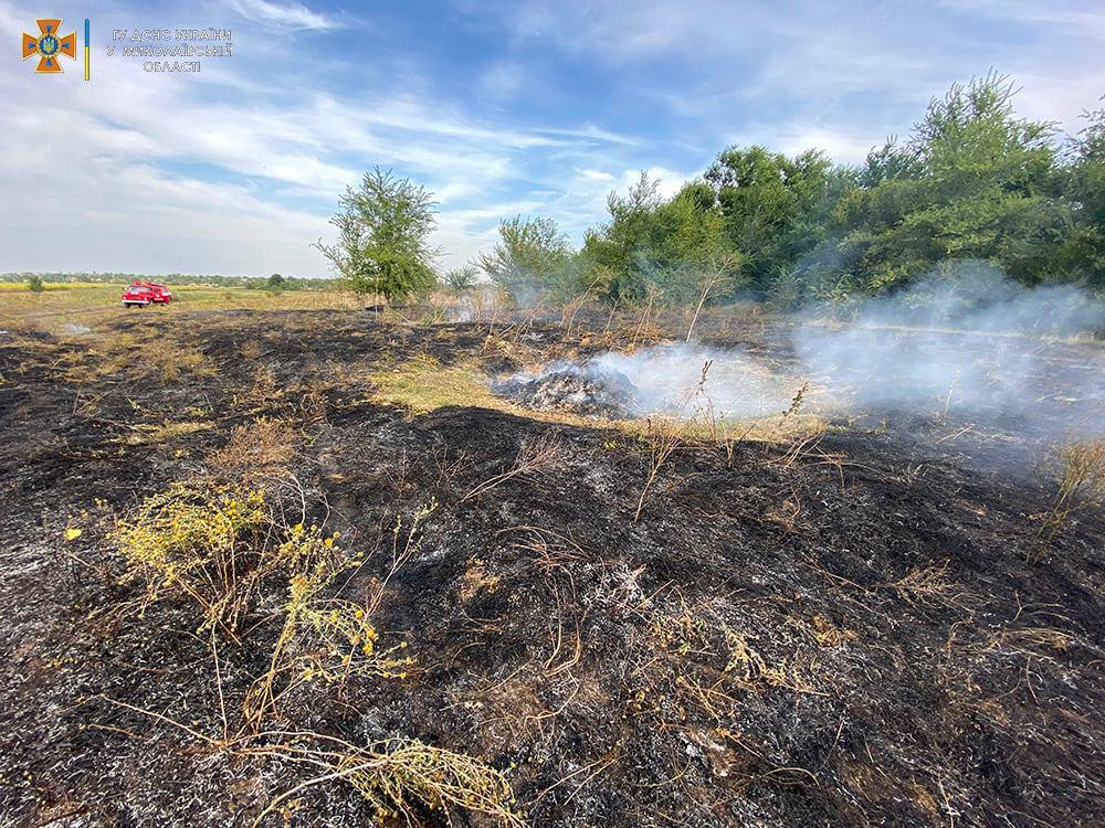 Опять поджоги. За сутки на Николаевщине горело свыше 2 га лесов и 32,5 га открытых территорий (ФОТО) 5