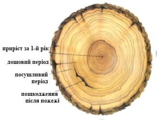 124 года. В РЛП «Приингульский» на Николаевщине определили возраст дубов (ФОТО) 5