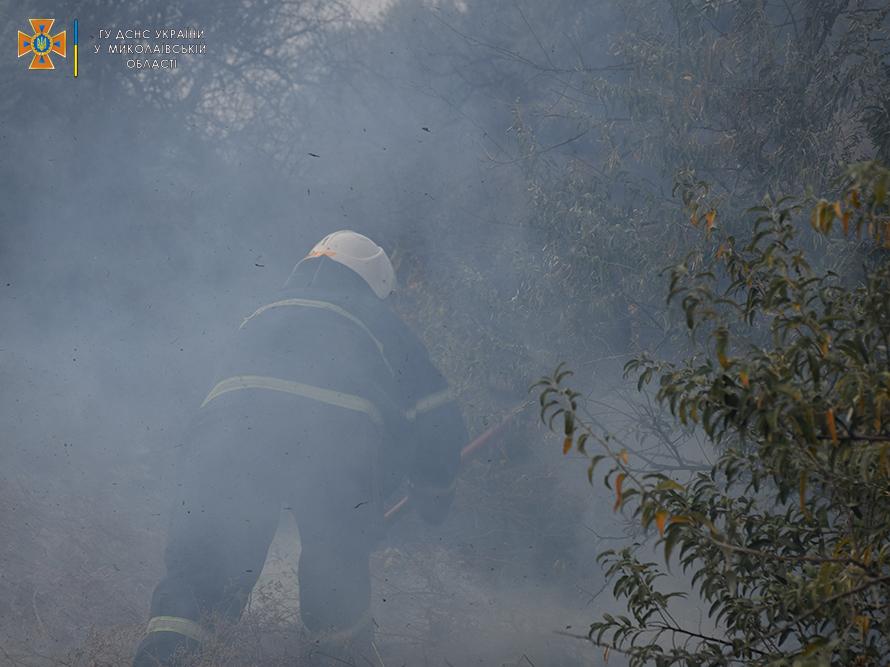 Возле Мешково-Погорелово выгорело почти 5 га (ФОТО) 7
