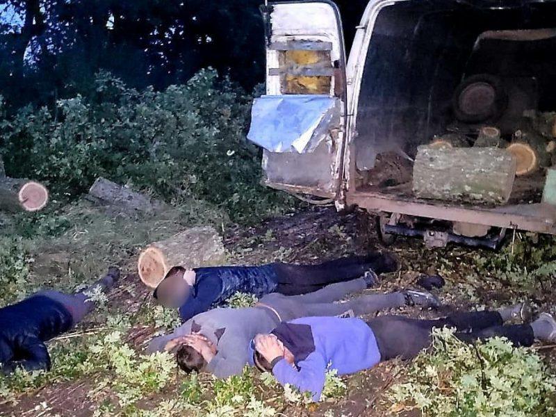 Возле Нового Буга поймали с поличным «черных лесорубов» — пилили дубы (ФОТО)