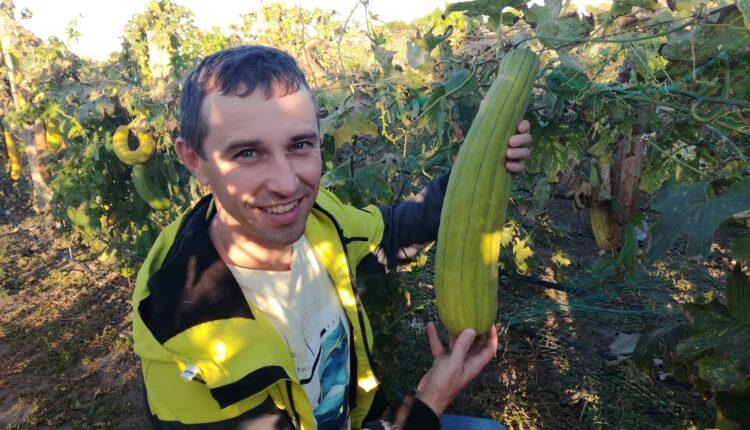 Чище вдвойне. Эко-губки из тыкв делает фермер на Херсонщине (ФОТО)