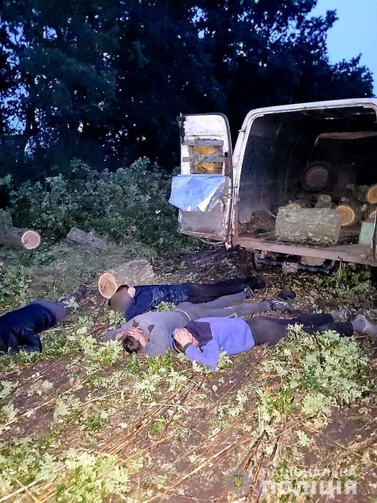 """Возле Нового Буга поймали с поличным """"черных лесорубов"""" - пилили дубы (ФОТО) 7"""