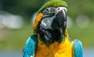 В Аргентине попугай помог раскрыть убийство своей хозяйки 3