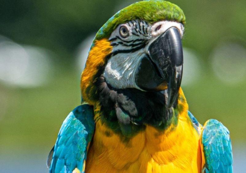 В Аргентине попугай помог раскрыть убийство своей хозяйки