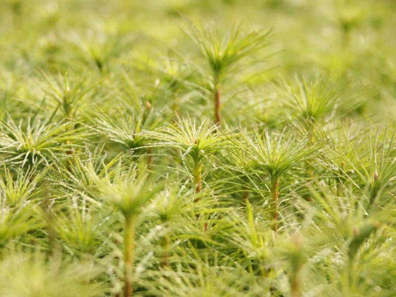 В Николаевской области хотят высадить 57 млн. деревьев — в рамках программы «Зеленая страна»