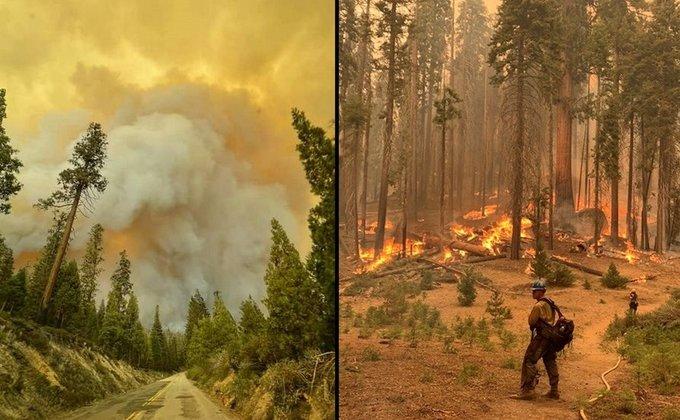 В Калифорнии горят реликтовые секвойи - их пытаются спасти огнеупорными одеялами (ФОТО) 3