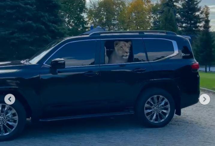 Не хлеба, так зрелищ. Депутат Харьковского горсовета возит с собой в машине льва (ВИДЕО)