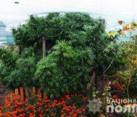 Элитную коноплю обнаружили на Николаевщине — вывозили мешками (ФОТО, ВИДЕО)
