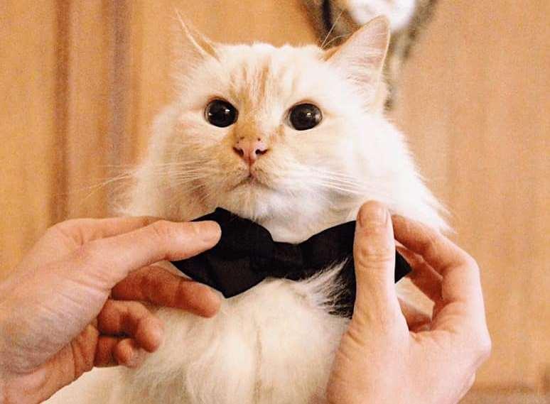 Отель Le Bristol Paris проводил на пенсию свой талисман - кота Фа-раона (ФОТО) 1